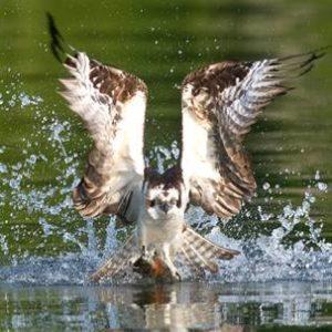 https://www.explorekawarthalakes.com/en/explore/birding.aspx