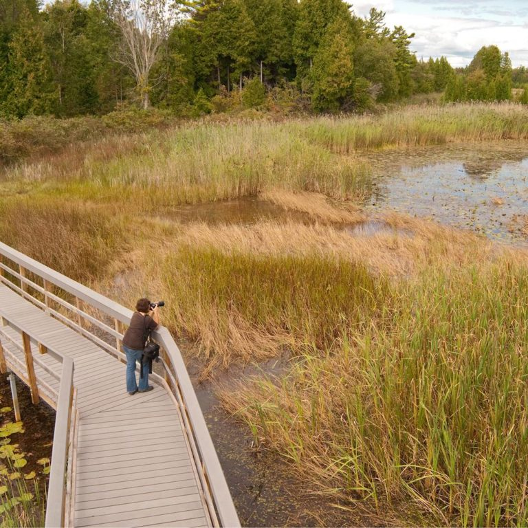 A bird watcher observes from a boardwalk in Presqu'ile Provincial Park (Photo Credit: R. J. Kettle / Dmax Photographic)