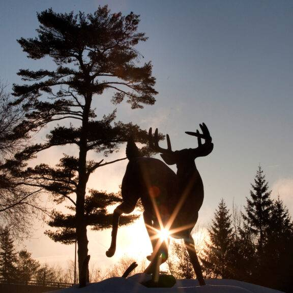 Buckhorn Buck statue with the sun rising in the background