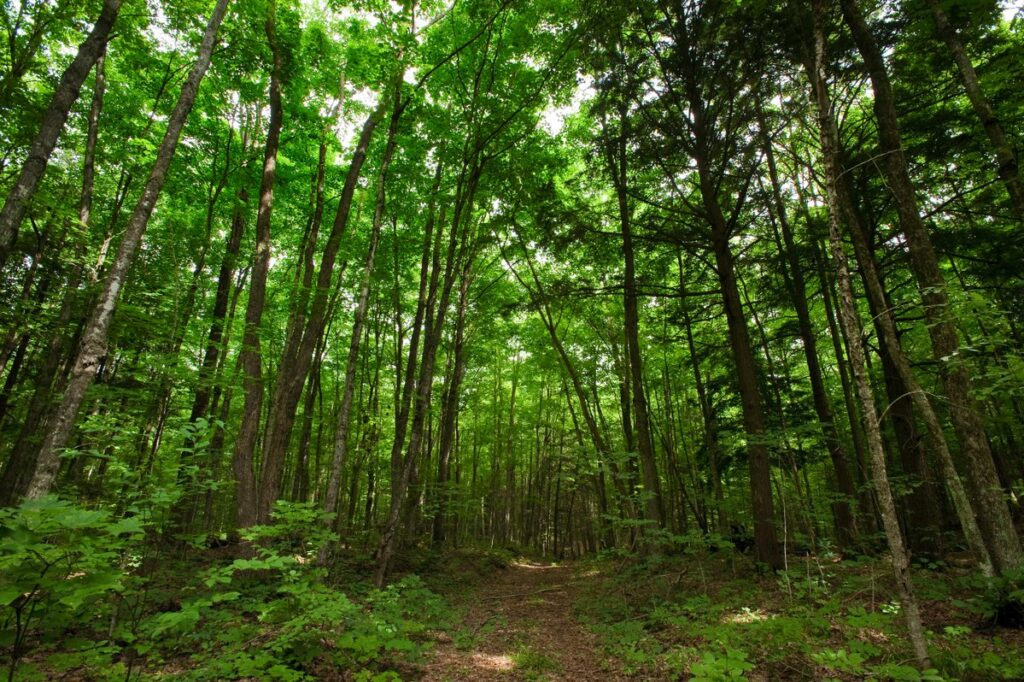 View down a forest trail beneath a rich green canopy