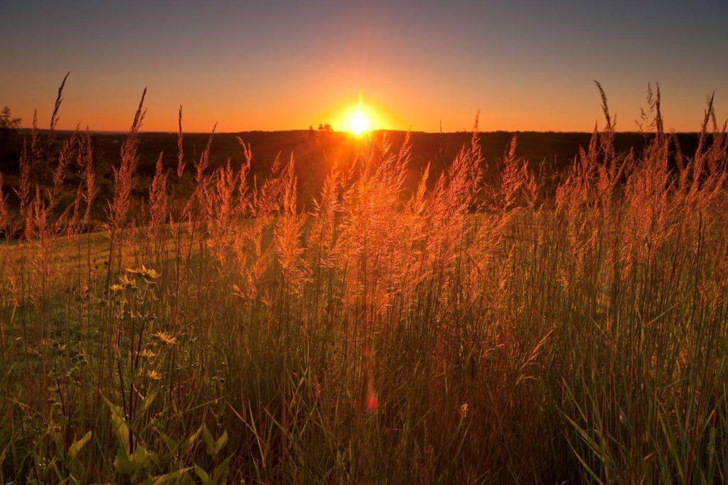 A sunset on the horizon makes tall grass appear golden