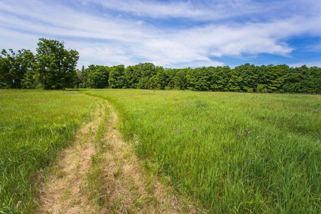 A trail leads through a grassy field